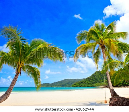 Couple palm tree on the summer tropical beach near sea water with blue sky background