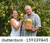 Couple picking apples in  basket. - stock photo