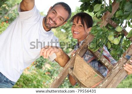 Couple picking fruit - stock photo