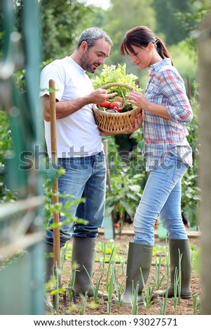 Couple picking vegetables in their kitchen garden - stock photo