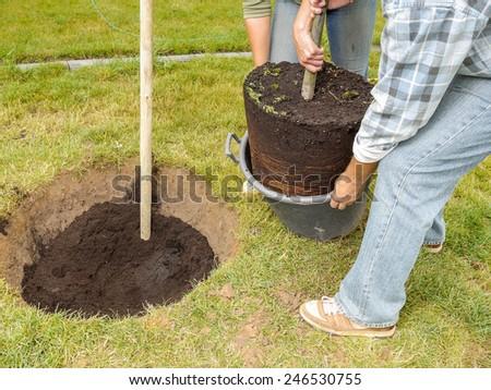 Couple planting oak tree in their backyard garden - stock photo