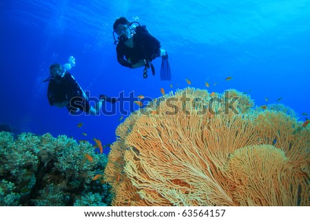 Couple Scuba Diving together over a beautiful coral reef