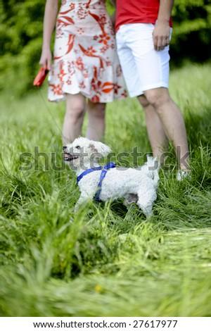 couple walking their dog - stock photo