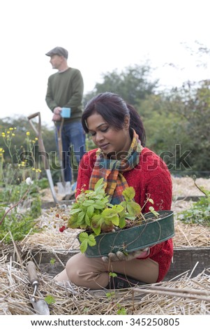 Couple working in their allotment. The woman is planting strawberries whilst the man is looking out to the field. - stock photo