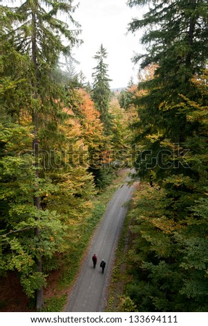 couples walking in forest road with tall trees - stock photo