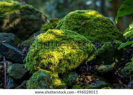 Covered rocks with moss