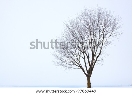 covered with frost on a foggy afternoon - stock photo