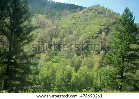 Covered with mixed forests of the Altai mountains. North-East Asia