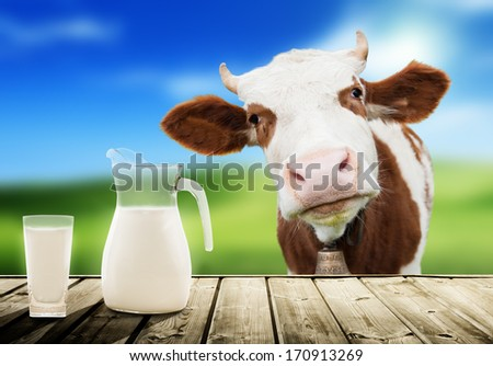 cow and milk - stock photo