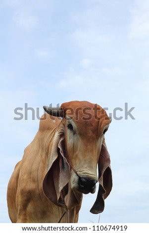 Cow and sky - stock photo