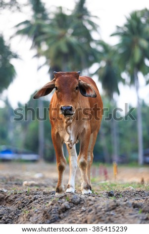 Cow are the most common type in farm
