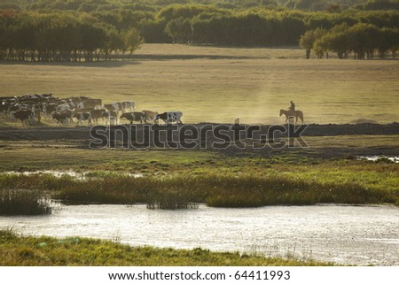 cow back home in the northeast of china - stock photo