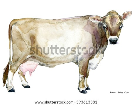 Cow. Cow watercolor illustration. Milking Cow Breed. Brown Swiss Cow - stock photo