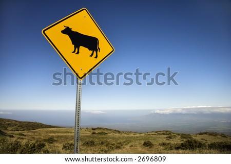 Cow crossing road sign in Haleakala National Park, Maui, Hawaii. - stock photo