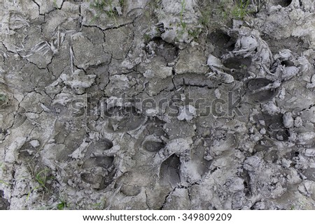 Cow Footprint Stock Photos, Royalty-Free Images & Vectors ...