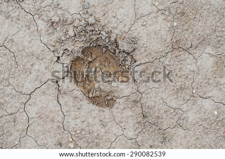 Cow Footprint Stock Photos, Images, & Pictures | Shutterstock