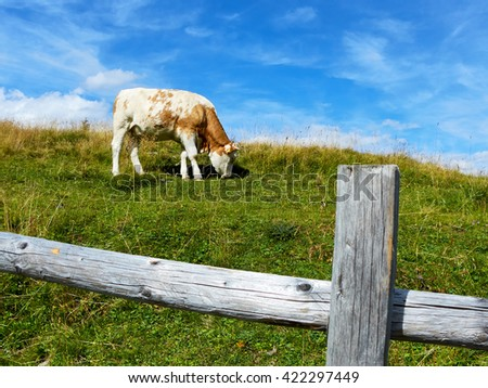 Cow grazes on mountain meadows in Austria, near a fence - stock photo
