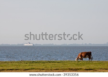 Cow grazing in a farmland near water with a ferry boat in the distance