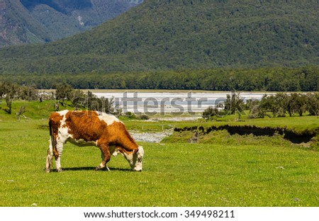 cow grazing in the green meadow - stock photo