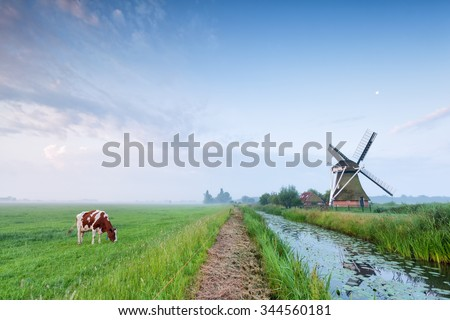 cow grazing on pasture by river and windmill, Holland - stock photo