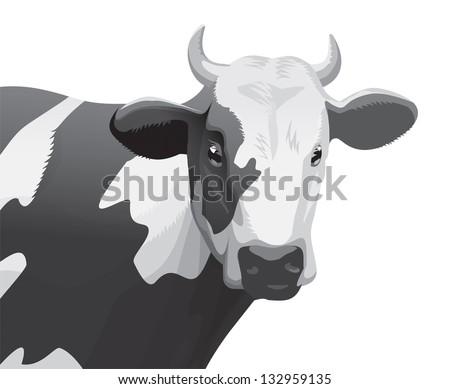Cow head - stock photo