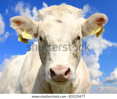 Cow head with beautiful sky background - stock photo