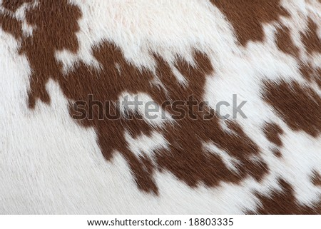 cow-hide - stock photo