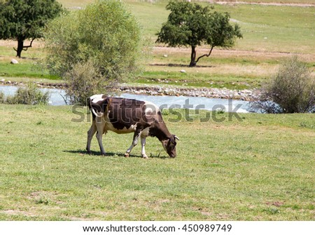 cow in a pasture in nature - stock photo