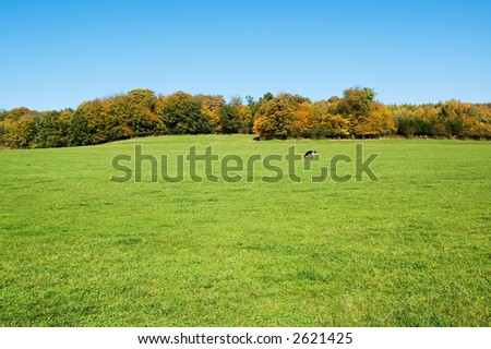 Cow in green field - stock photo