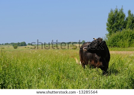 Cow in green paradise - stock photo