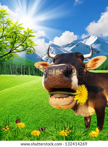 Cow in mountains on a green glade - stock photo