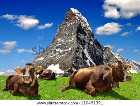 Cow in the meadow.In the background of the Matterhorn-Swiss Alps - stock photo