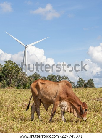 Cow is grazing on pasture in wind farm with windmill background on a bright sunny day in Thailand. - stock photo