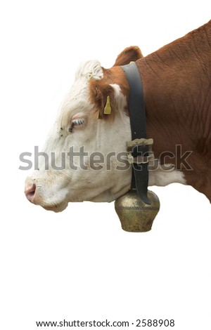 cow-isolated - stock photo