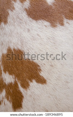 cow leather texture background