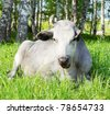 Cow lies in the grass - stock photo
