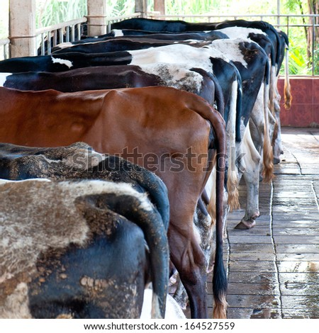 Cow milking facility - stock photo