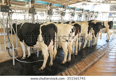 Cow milking facility in the farm - stock photo