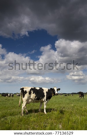 Cow on a green meadow underneath strong clouds