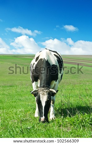 cow on green grass in village - stock photo