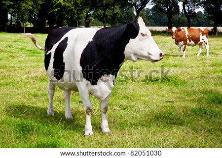 cow on meadow - stock photo