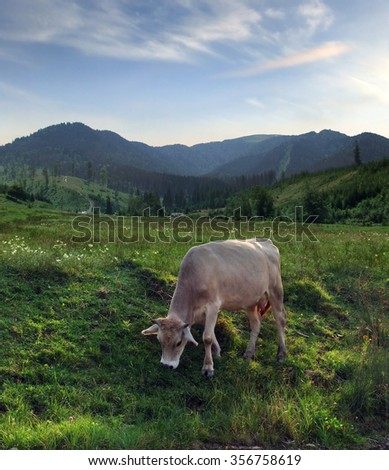 Cow pasturing on a meadow against mountain landscape - stock photo