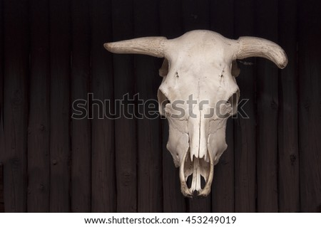 cow`s skull on wooden wall - stock photo