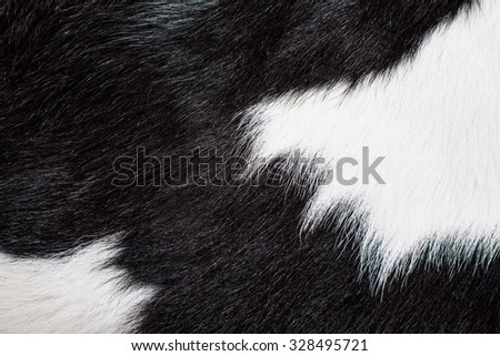Red brown grey wolf fox bear 249674503 shutterstock cow skin cow hair fur black and white animal background pattern voltagebd Image collections