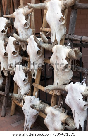 Cow skulls for sale in Santa Fe, New Mexico - stock photo