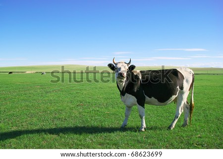 Cow standing and looking at somewhere on the lawn - stock photo