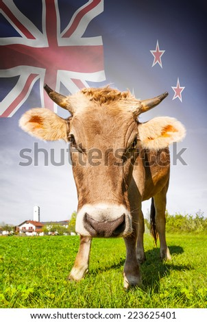 Cow with flag on background series - New Zealand - stock photo