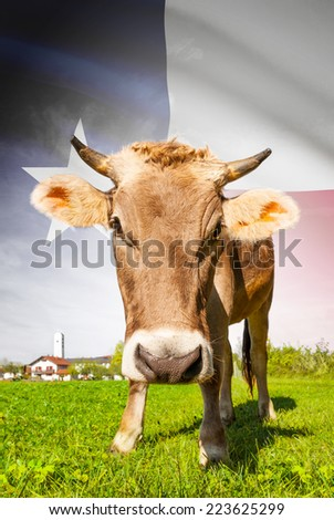 Cow with flag on background series - State of Texas - stock photo