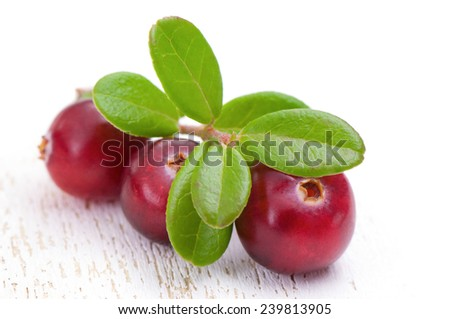 Cowberry with green leaves.  - stock photo