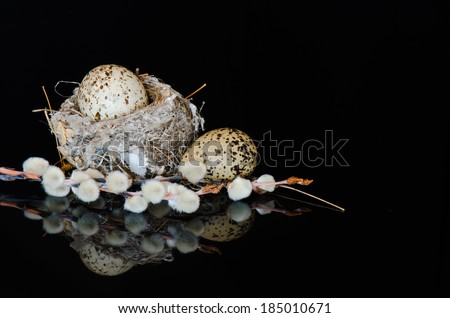 Cowbird and killdeer eggs with a nest and pussy willows on a reflective black surface - stock photo